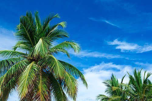 Palm Trees with Blue Skies